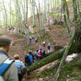 Trekking nella Foresta di Pietralunga